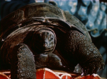 The Sea Lord in his angry Tortoise form